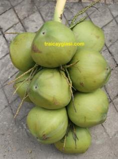 Dừa Lai - Dừa Ta